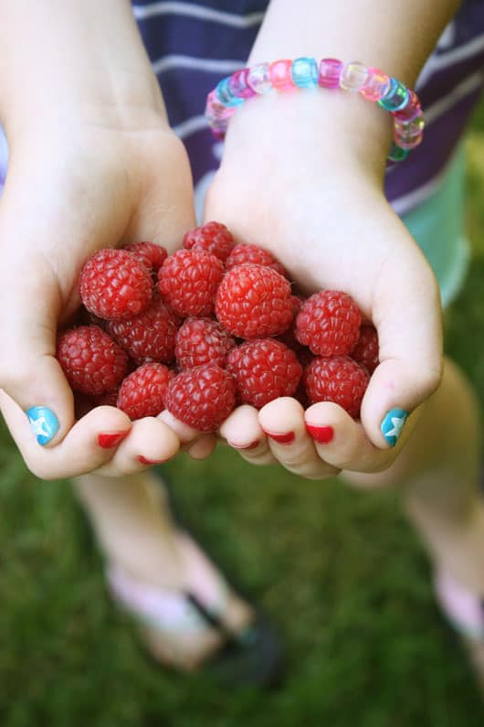 hands holding fresh raspberries
