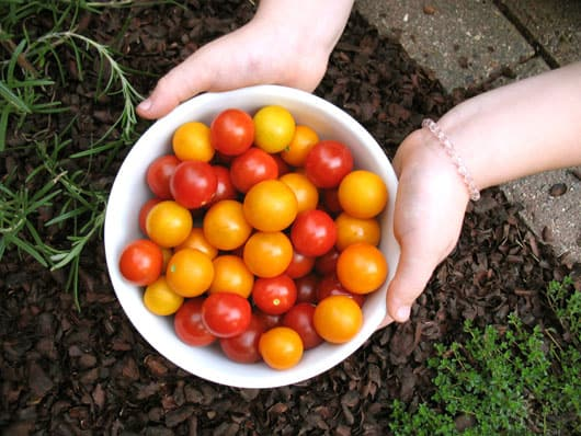 garden tomatoes in a bowl