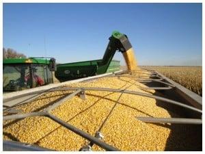 unloading corn into truck