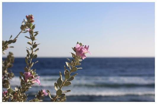 flowers over the sea