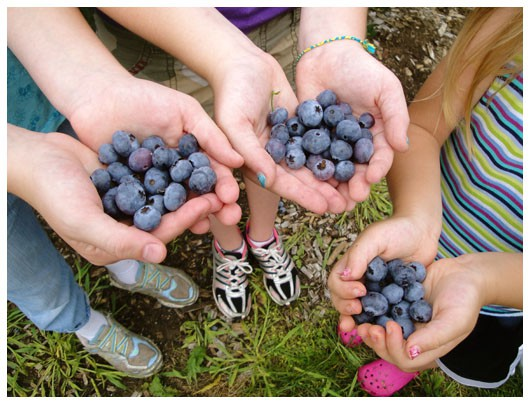 handfuls of blueberries