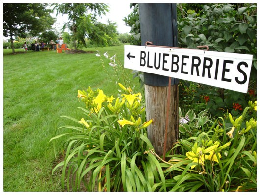 blueberry picking sign