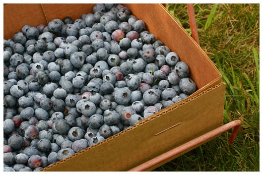 a box of blueberries