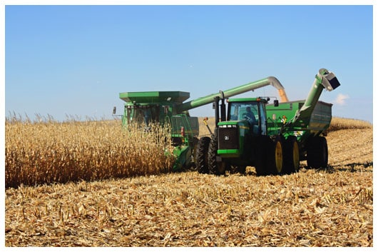 A Green Combine Harvesting Corn