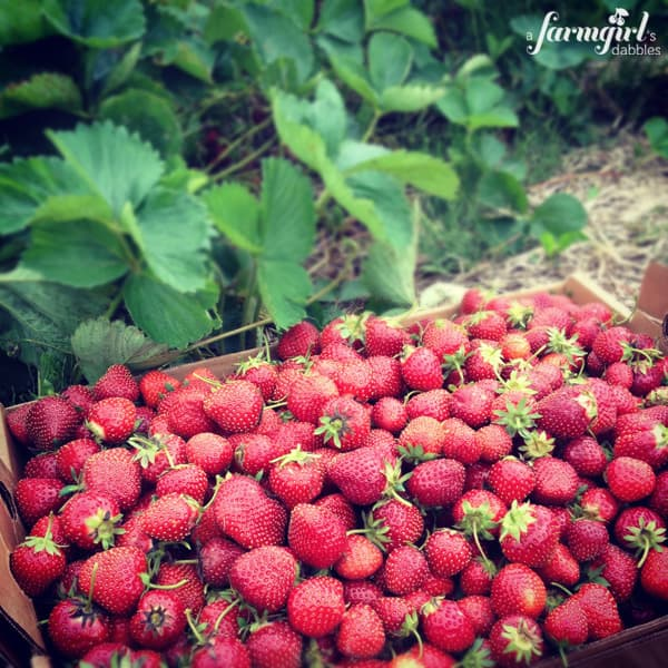 a box of fresh picked strawberries