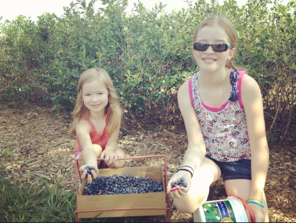 two girls picking blueberries