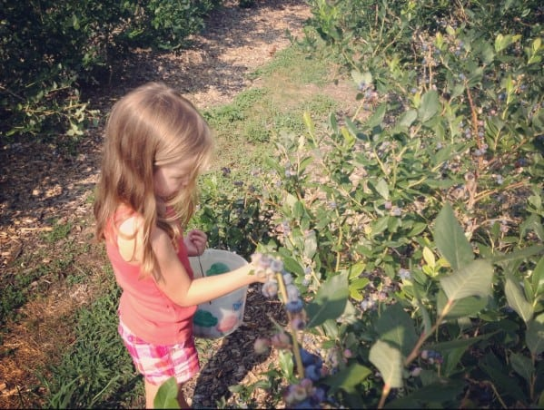a young girl picking blueberries