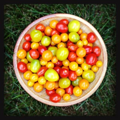 a bowl of fresh picked tomatoes