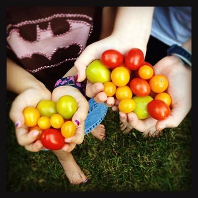 handfuls of tomatoes