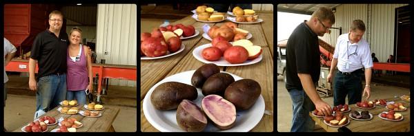 sampling different types of potatoes