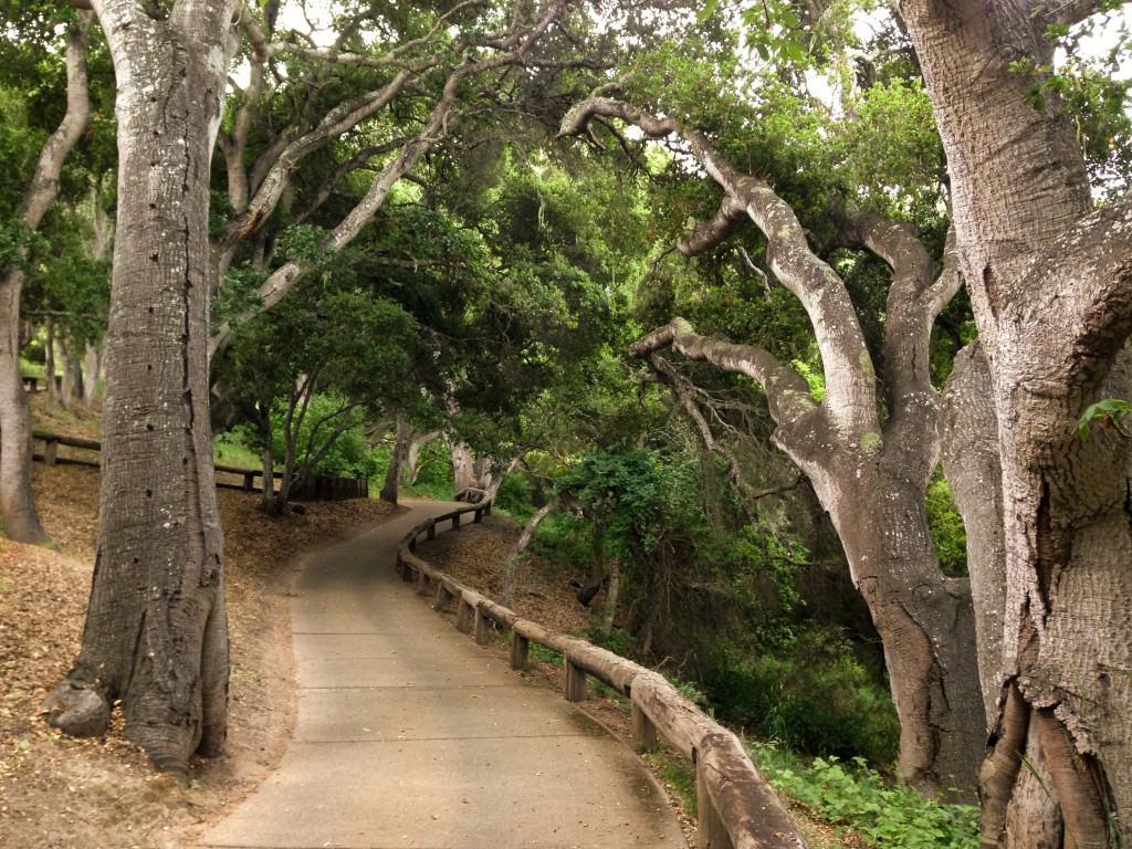 a path going through a park