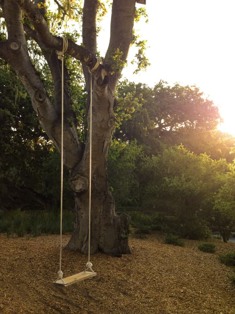 a rope swing on a tree