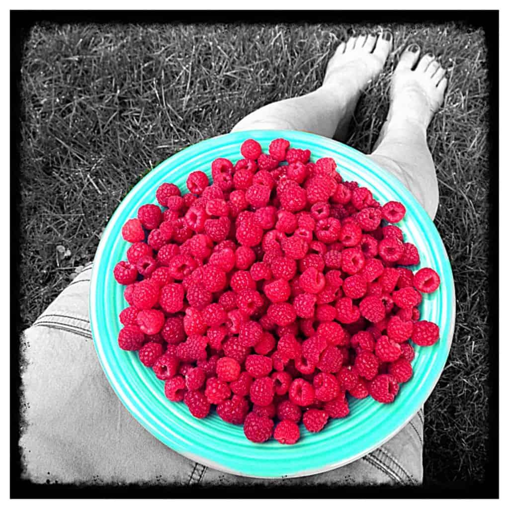 a blue plate of raspberries