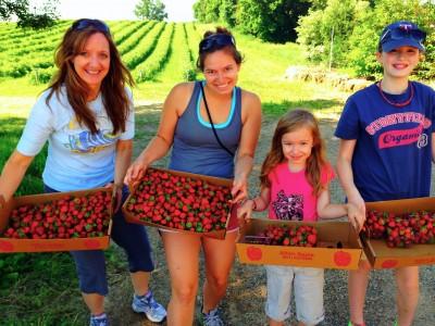 picking strawberries - www.afarmgirlsdabbles.com