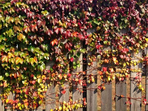 Nantucket 08 - www.afarmgirlsdabbles.com