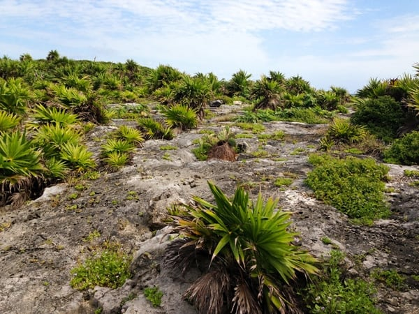 Tulum Ruins - Mexico - afarmgirlsdabbles.com