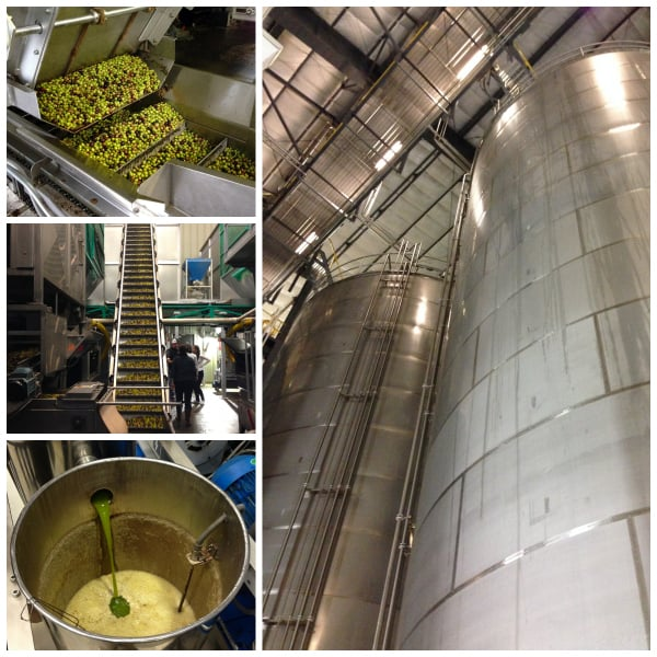 olive oil cold pressing process