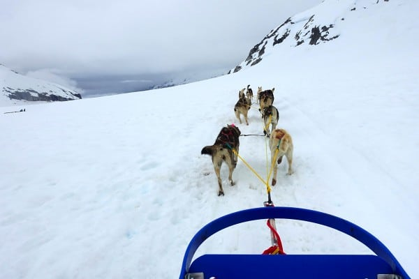 dogs pulling a sled on Mendenhall glacier