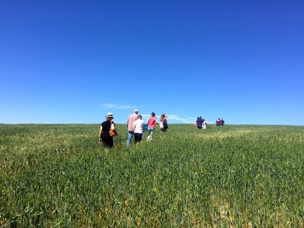 a group of people walking through a wheat field