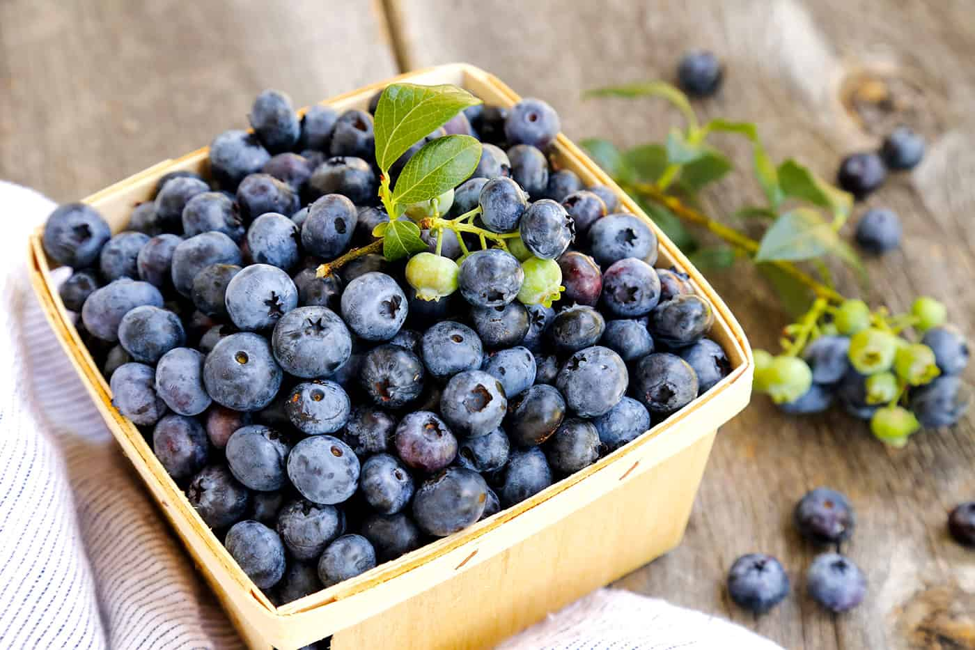 A pint of freshly picked blueberries