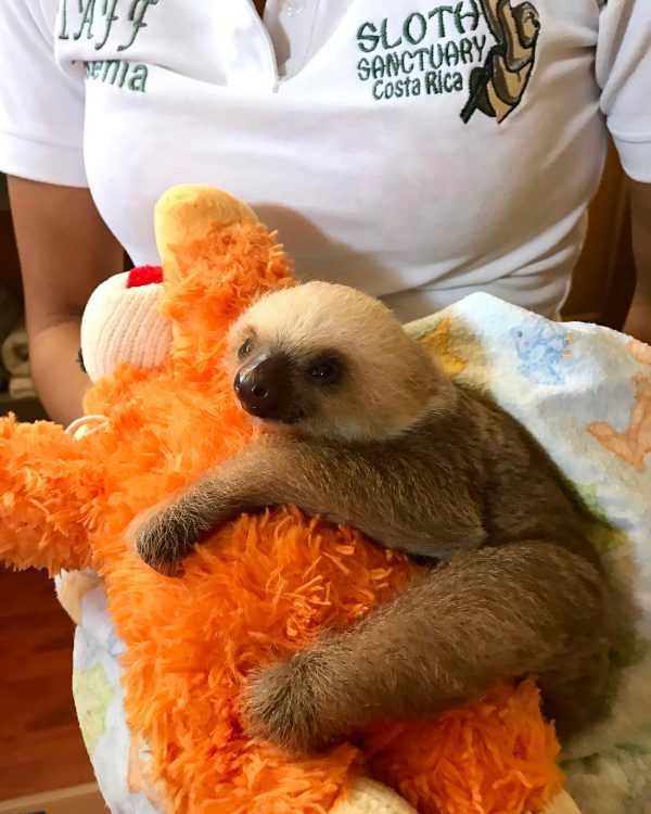 Costa Rica and the Sloth Sanctuary